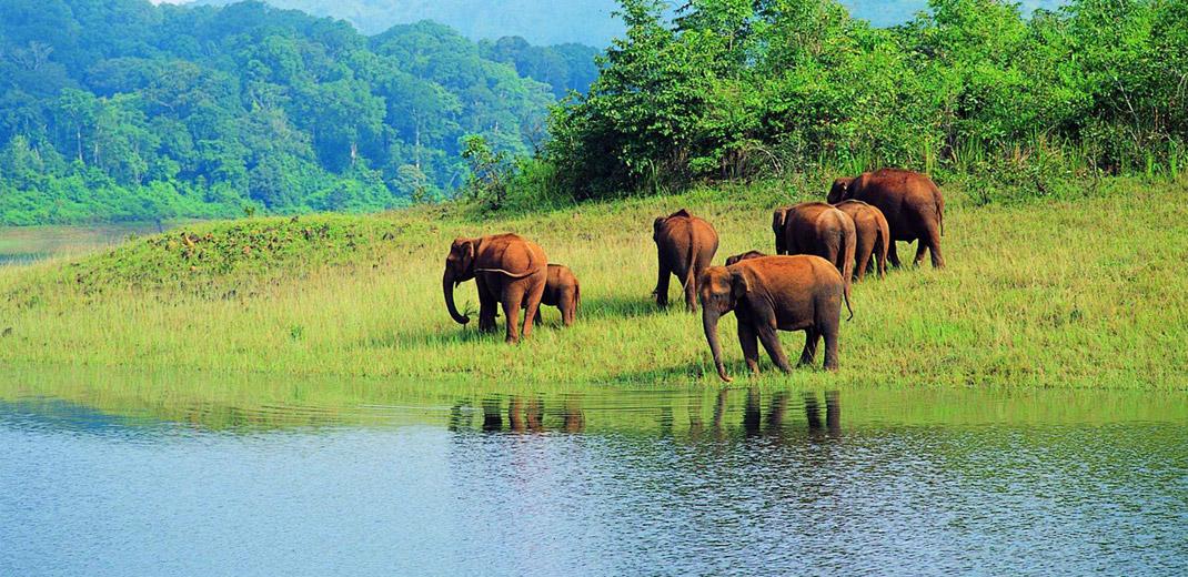 wild_elephant